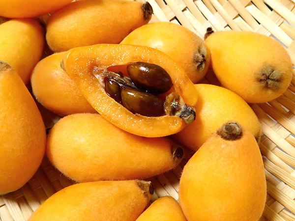 枇杷  图片来自果物配