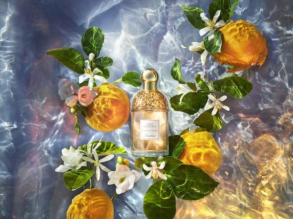 新品倾橙之恋的加入为花草水语这座奇妙自然花园再添几份夏日浪漫气息